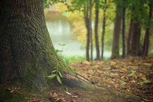 tree-569275_1920